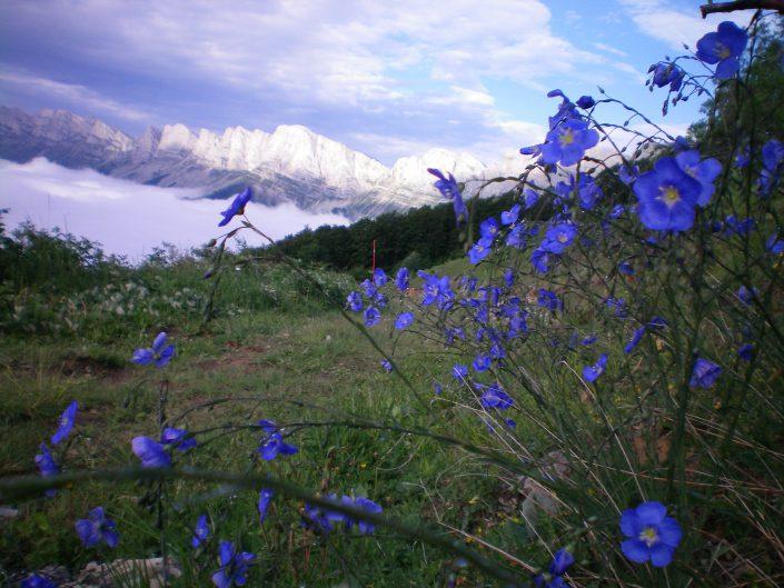 paysage fleur