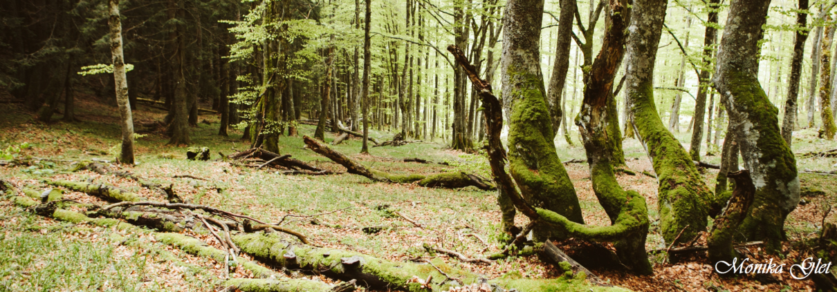 accueil foret